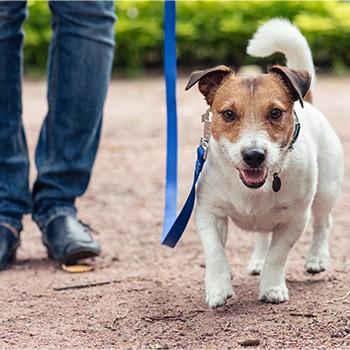 Dog Socialization and Obedience